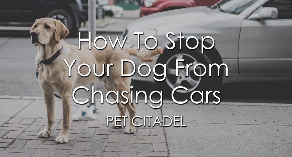 How To Stop Your Dog From Chasing Cars - Banner Image