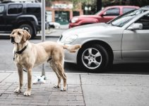 How To Stop Your Dog From Chasing Cars – 5 Ways