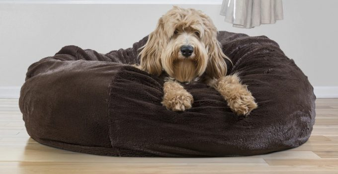 5 Best Dog Beds For Cockapoos – 2021 Reviews & Buying Guide