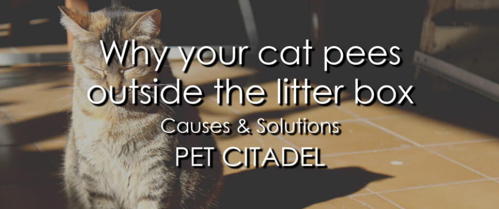 Why your cat pees outside of the litter box - Banner