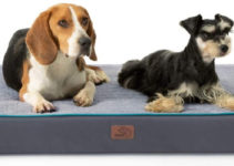 5 Best Orthopedic Dog Beds – 2021 Reviews & Buying Guide
