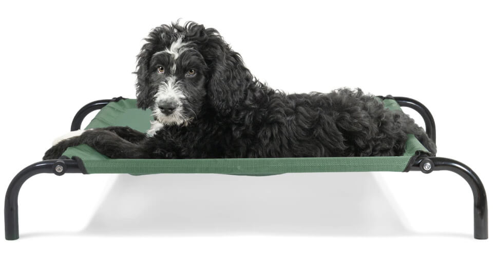 FurHaven Elevated Reinforced Cot Dog Bed - green, with long-haired dog on top