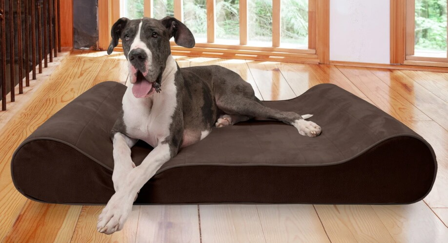 FurHaven Microvelvet Luxe Lounger Dog Bed - large dog sitting on top