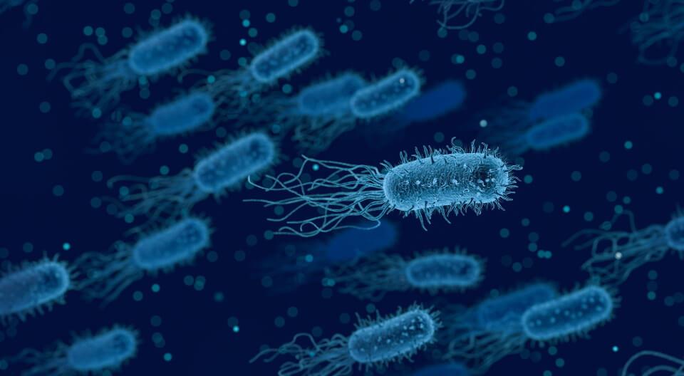 Bacteria imaging