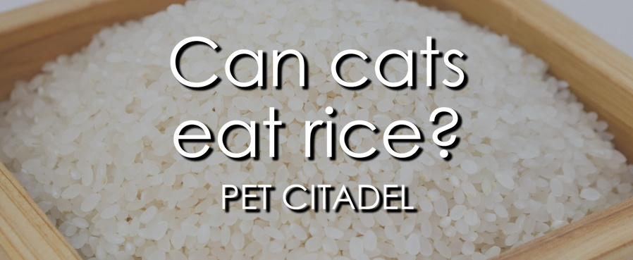 Can cats eat rice? - Banner