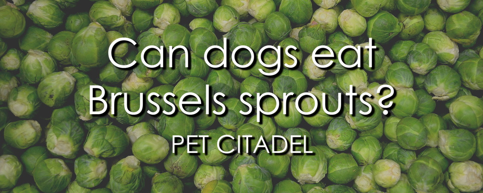 Can Dogs Eat Brussels Sprouts? - Banner