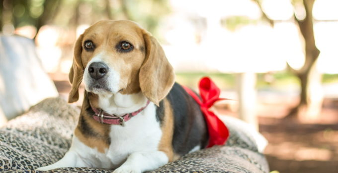 How Long Are Dogs Pregnant? – Gestation & The Reproductive Cycle