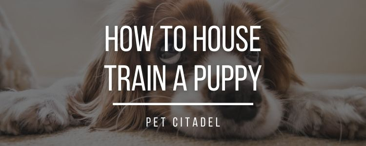 How To House Train A Puppy - Banner Image