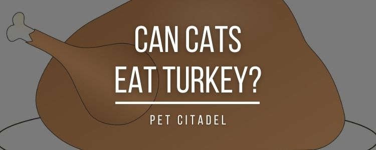 Can Cats Eat Turkey? - Banner Image