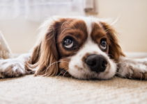 How To House Train A Puppy – A Complete Guide