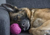 5 Best Dog Beds For German Shepherds – 2021 Reviews & Buying Guide