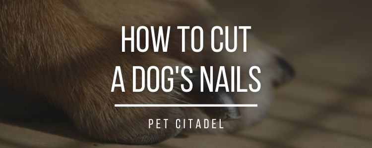 How To Cut A Dog's Nails - Banner Image