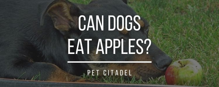 Can Dogs Eat Apples? - Banner