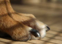 How To Cut A Dog's Nails – 7 Easy Steps