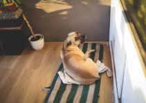 12 Reasons Why Dogs Scratch Their Beds