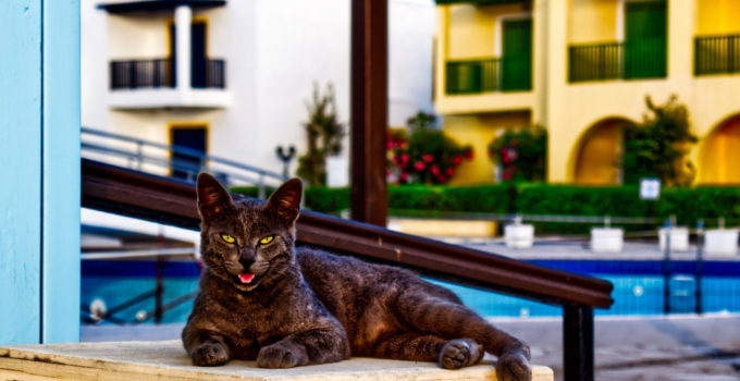 5 Reasons Why Your Cat Is Panting